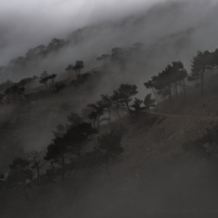 in the mist 3/3 (Chios isl. mountains)