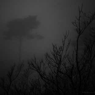 ...in the Mist
